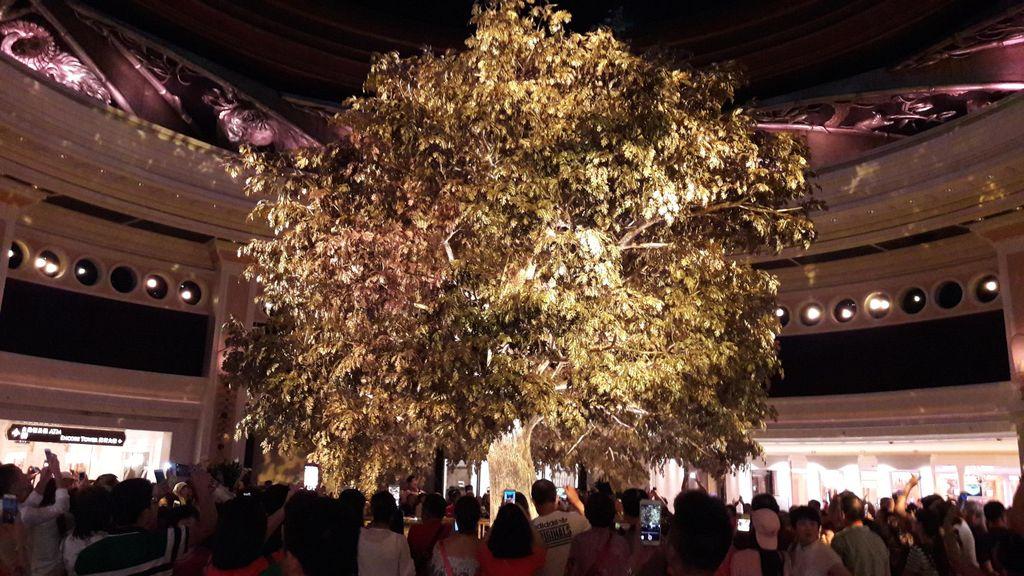 Ada Pohon Berdaun Emas 24 Karat di Macau