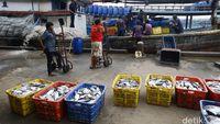 Siapkan Rp 70 Miliar, Susi 'Sulap' Pelabuhan Tak Lagi Kumuh dan Bau