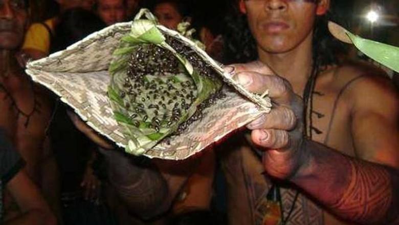 Foto: Suku Mawe di Amazon dan sarung tangan berisi semut peluru (Ajay Suryawanshi/Facebook)