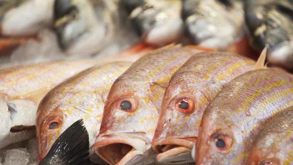 Makan Ikan Tiap Hari Bikin Alergi, Mitos atau Fakta?