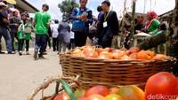 Perang tomat ini merupakan acara puncak Hajat Lembur Hajat Buruan yang dilaksanakan setiap awal bulan Muharam. Tradisi ini sebagai bentuk ungkapan rasa syukur masyarakat atas panen melimpah serta tanah yang subur (Baban/detikTravel)