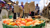 Jika Spanyol punya Festival La Tomatina, Bandung punya Rempug Tarung Adu Tomat atau perang tomat. Tradisi itu digelar di Kampung Cikareumbi RW 3, Desa Cikidang, Kecamatan Lembang, Kabupaten Bandung Barat, Jawa Barat (Baban/detikTravel)