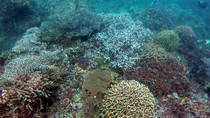 Serupa Raja Ampat, Alam Bawah Laut Cantik Juga Ada di Banyuwangi