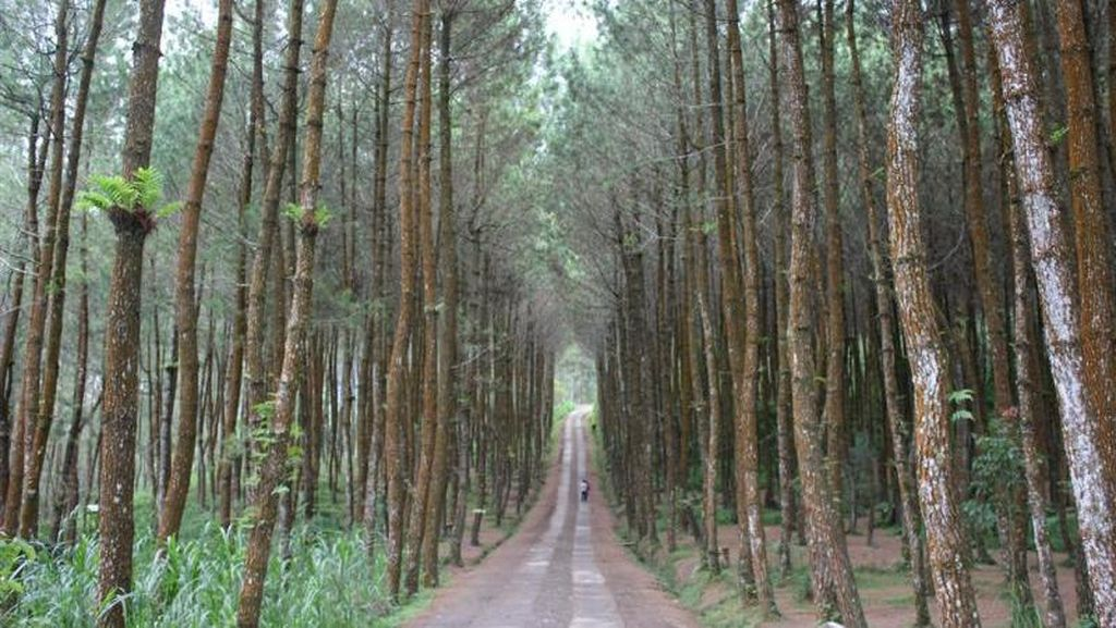 2 Juta Ha Hutan Produksi Telantar, KLHK akan Cabut Izin Kelolanya