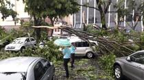 Dinas Pertamanan Bisa Ganti Rugi Mobil yang Tertimpa Pohon, Ini Syaratnya