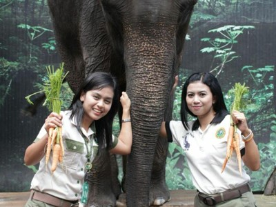 Pawang Hewan Cantik & Penuh Dedikasi di Taman Safari Prigen Pasuruan