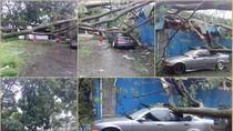 Hujan Angin di Bandung, Dua Mobil Tertimpa Pohon Tumbang