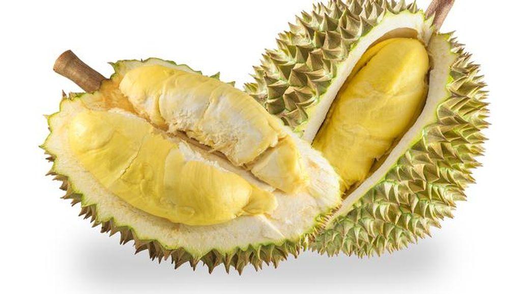 Pencinta Durian, Petani Durian Riau akan Gelar Pesta Makan Durian, Mau Ikut?