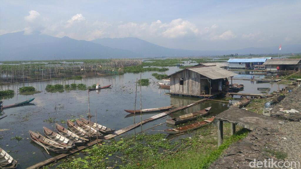Ramai-ramai Menyelamatkan Rawa Pening dari Invasi Eceng Gondok