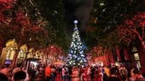 Pohon Natal yang Menjadi Buah Bibir di Australia
