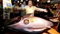 Fantastis! Tuna Bluefin 212 Kg Dilelang Rp 8 M di Jepang