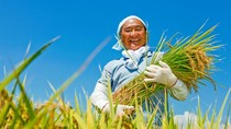 Jepang Bantu Petani Lokalnya Dapatkan Sertifikat Keamanan Pangan