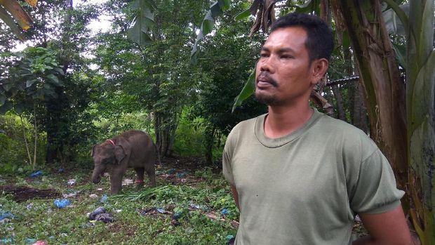 Jamaluddin merawat dan melatih gajah selama 20 tahun.