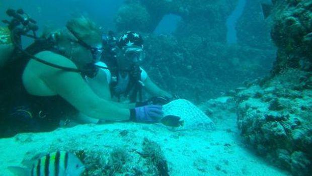 Para penyelam di Neptune Memorial Reef yang bisa melihat siapa-siapa saja yang dimakamkan di sana (Neptune Memorial Reef/Facebook)