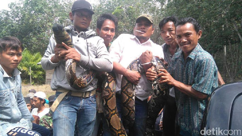 Polisi dan Dishut Koordinasi Cegah Orang Dimangsa Ular Piton