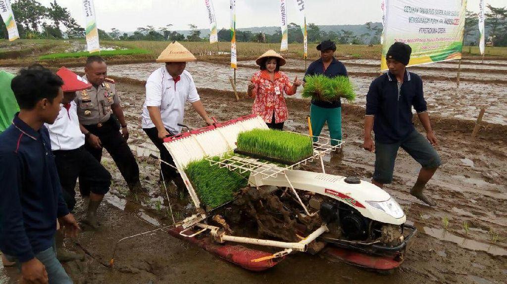 Tingkatkan Produksi Padi, Petani Semarang Manfaatkan Sistem Jarwo