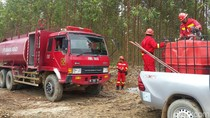 Kisah Pasukan Pemadam Kebakaran Hutan Dicegat Harimau