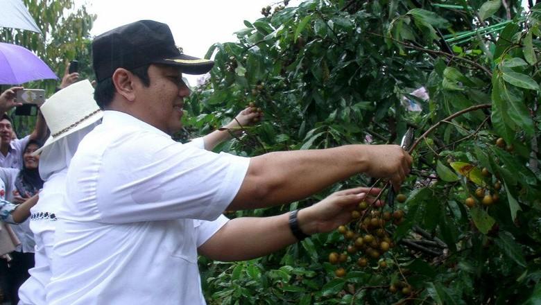 Perkebunan, Sektor Menjanjikan di Kota Metropolitan Semarang