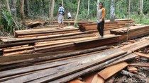 Suaka Margasatwa di Riau Dijarah Pembalak, Kayu-kayu ini Buktinya