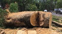Nasib Alfa, Balita Anak Korban Tewas Pohon Tumbang di Dekat UI