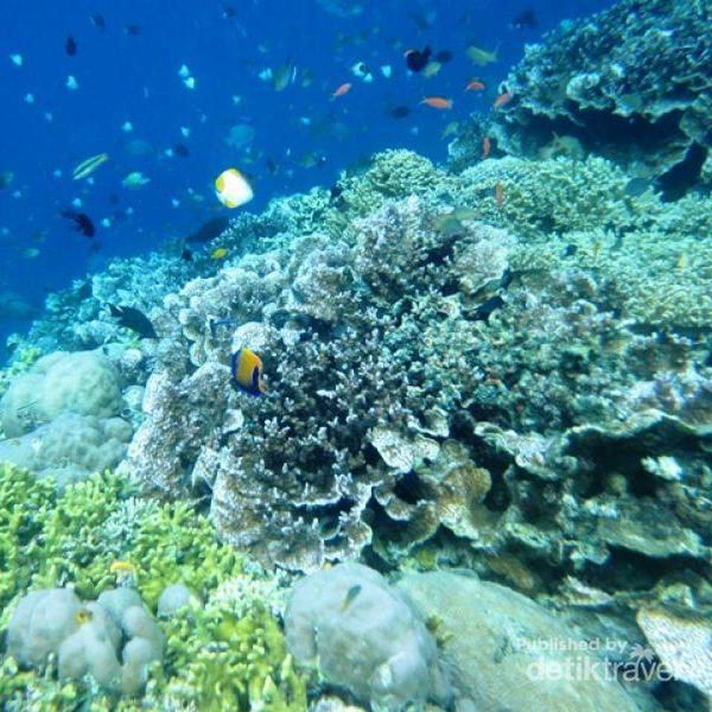 Wisata Bahari Hingga Budaya Jadi Daya Tarik Kepulauan Anambas