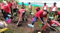 Cegah Banjir dan Longsor di Lereng Wilis, Pemkab Kediri Tanam Bambu