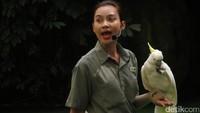Salat satu petugas yang bertugas untuk menghibur pengunjung dengan pertunjukan burung seru. Ajaklah si buah hati untuk melihatnya (Andhika/detikTravel)