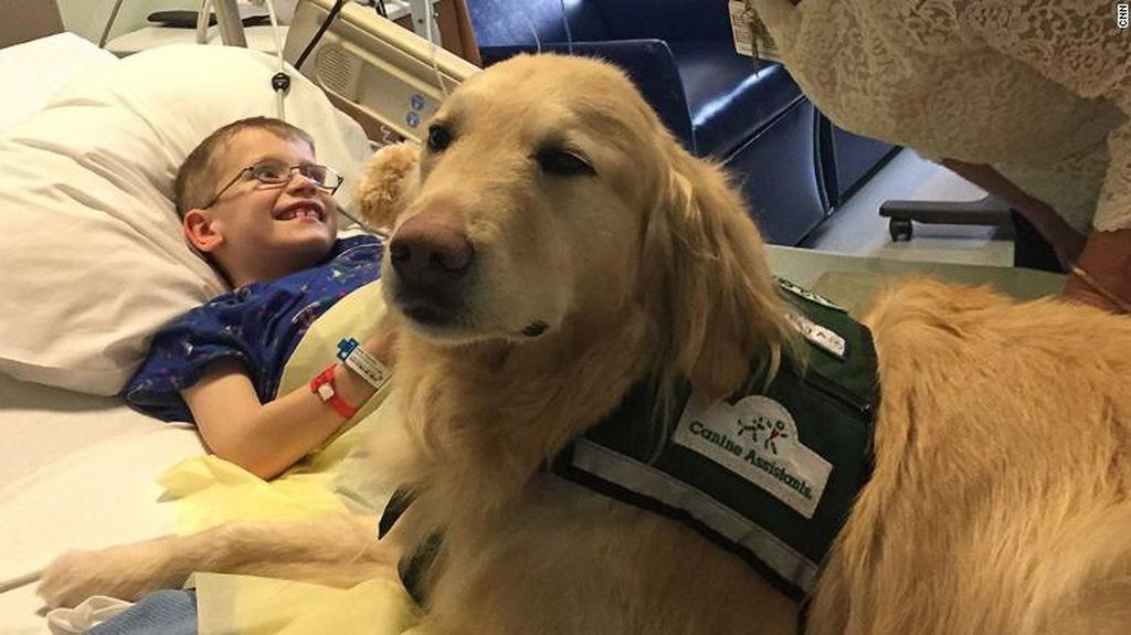 Cerita Casper, Anjing yang Menjadi Terapis di Rumah Sakit