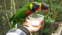 Pengunjung pun bisa memberi makan dan berinteraksi langsung dengan burung yang ada. Makanannya pun disediakan oleh pihak pengelola (Andhika/detikTravel)