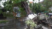 Hujan dan Angin Kencang Tumbangkan Pohon Besar di Yogyakarta