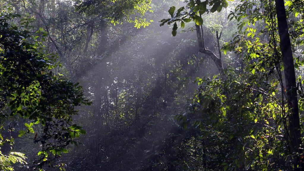 Lampung Timur Punya Hutan Paling Rapat di Indonesia?