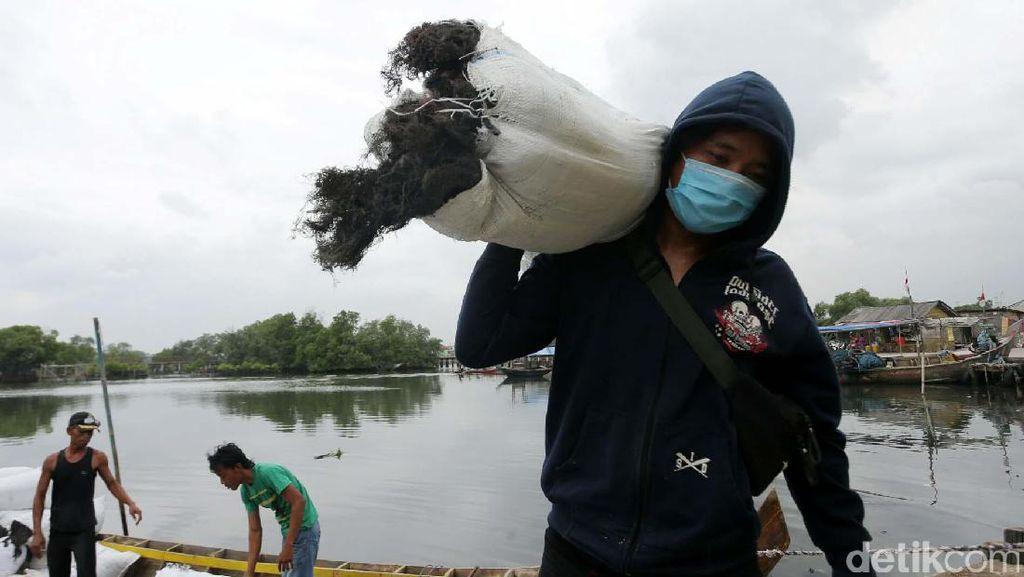 Pencemaran Air Laut Kurangi Kualitas Rumput Laut