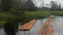 Lagi, Polisi Temukan Aktivitas Illegal Logging di Hutan Kerumutan