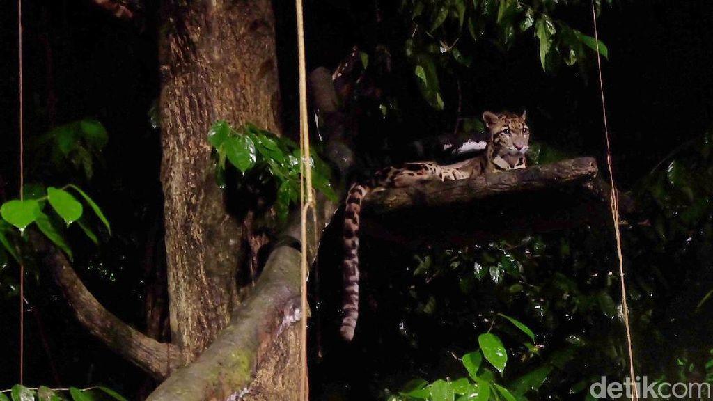 Safari Malam di Singapura, Ngeri-ngeri Seru!