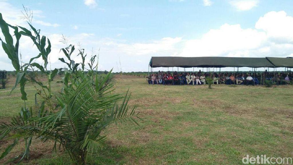 Kebun Sawit Kosong di Sumut akan Disulap Jadi Lahan Jagung
