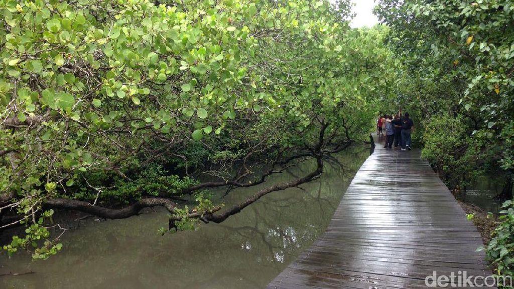 Timbun Hutan Mangrove, Anggota DPRD Badung Diperiksa Polda Bali
