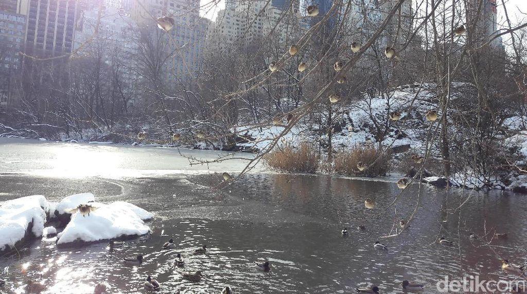 Foto: Cantiknya Pemandangan Central Park New York Kala Bersalju
