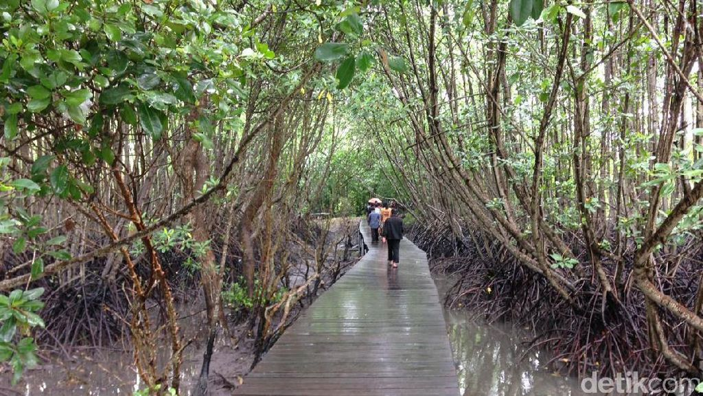 Hutan Mangrove Bali, Alternatif Wisata Sarat Edukasi di Denpasar