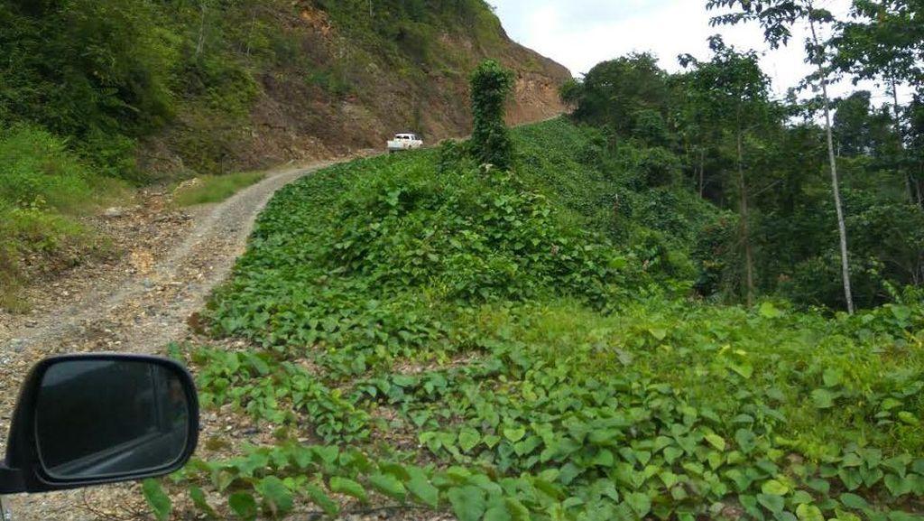 Tembus Gunung dan Hutan, Ini Jalan Trans Papua Sorong-Manokwari
