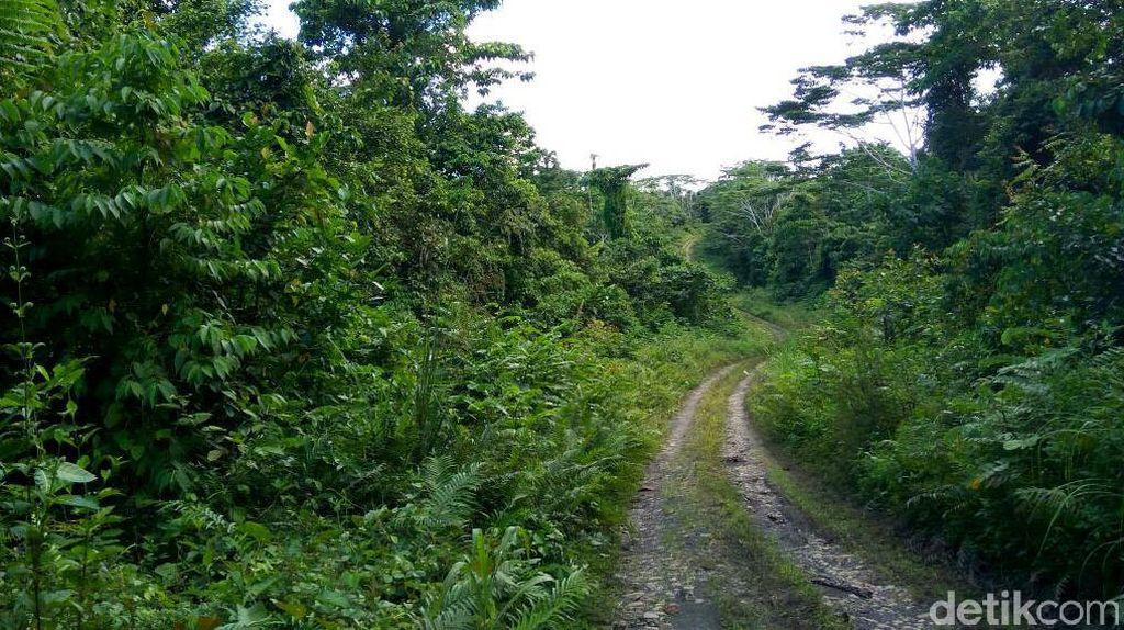 12 Km Trans Papua Ruas Manokwari-Batas Provinsi Masih Tertutup Hutan