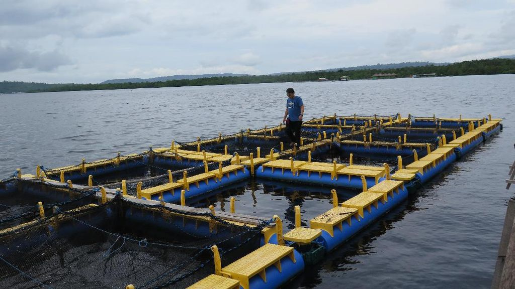 Program Emas Biru Bikin Panen Nelayan Maluku Meningkat