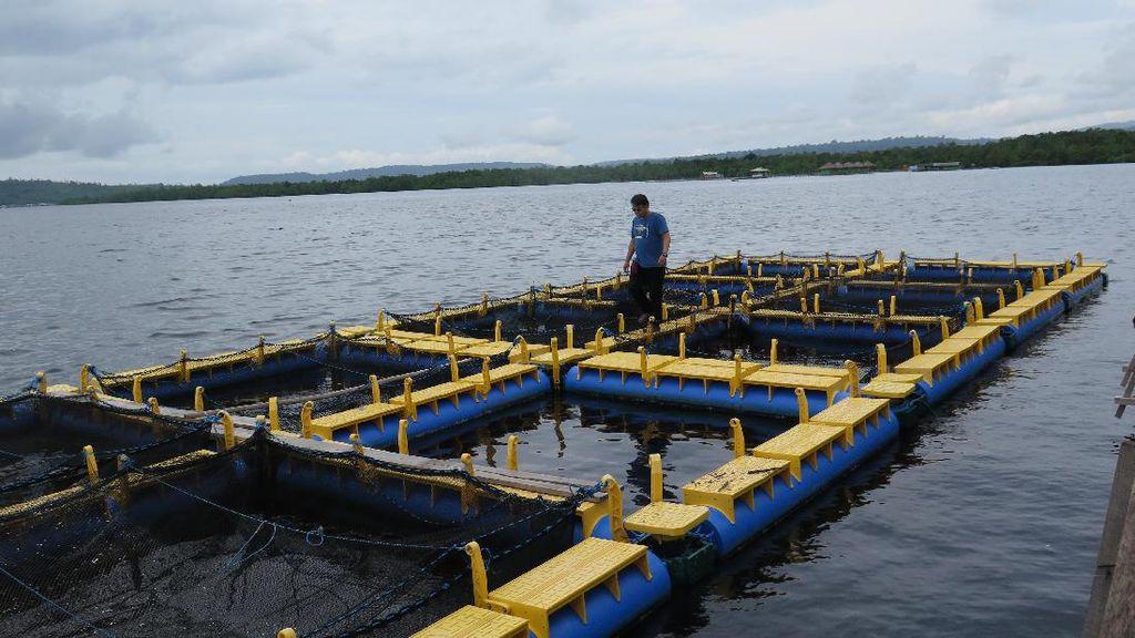 17.226 Petak Keramba Apung Cemari Air di Danau Maninjau