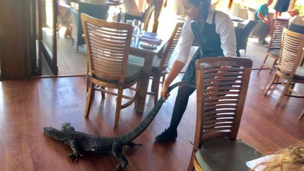 Aksi Nekat Pelayan Perempuan Usir Biawak Dari Restoran