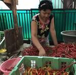 Harga Cabai Rawit Merah Rp 150.000/Kg, Apakah Petani Untung?