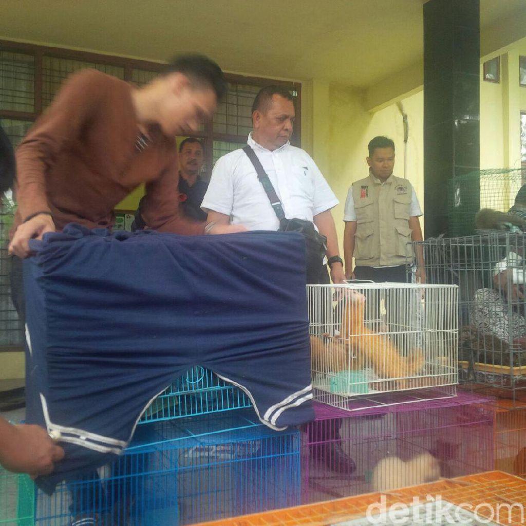 Tim KLHK Gagalkan Penyelundupan Satwa Liar di Pekanbaru