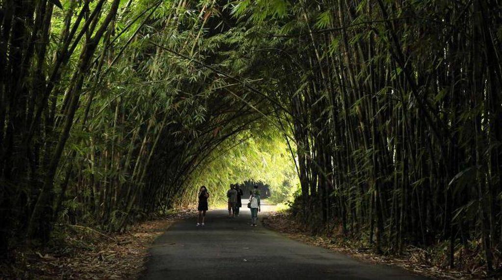 Bukan di Jepang, Ini Desa Panglipuran di Bali