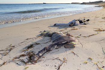Tragis, Puluhan Imigran Tewas di Pantai Libya
