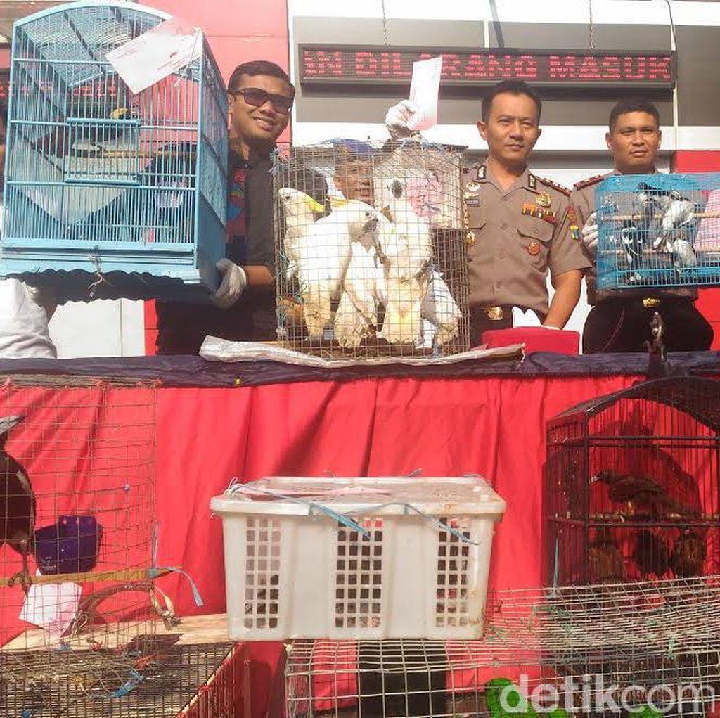 Sindikat Penyelundupan Satwa di Surabaya Gunakan Modus Baru