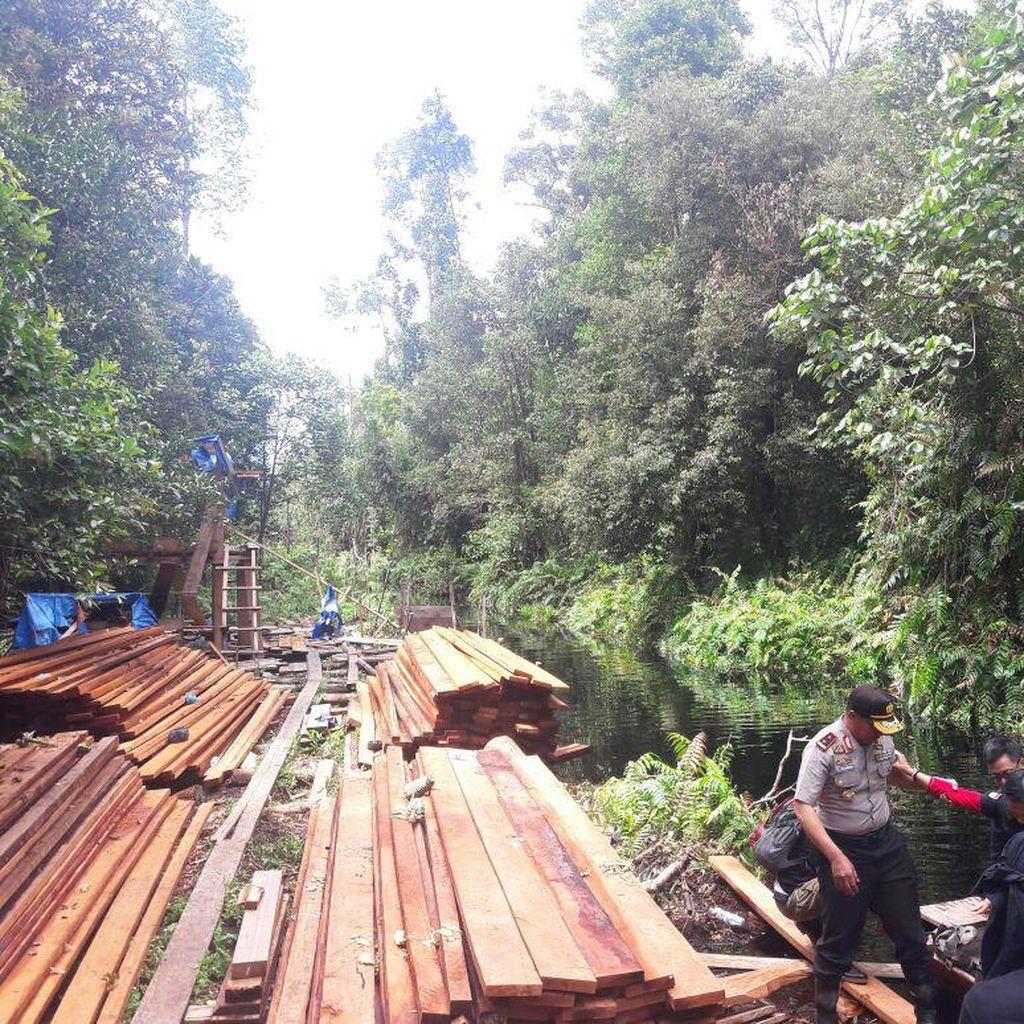 Cagar Biosfer Dijarah, Polda Riau Bekuk 1 Pelaku