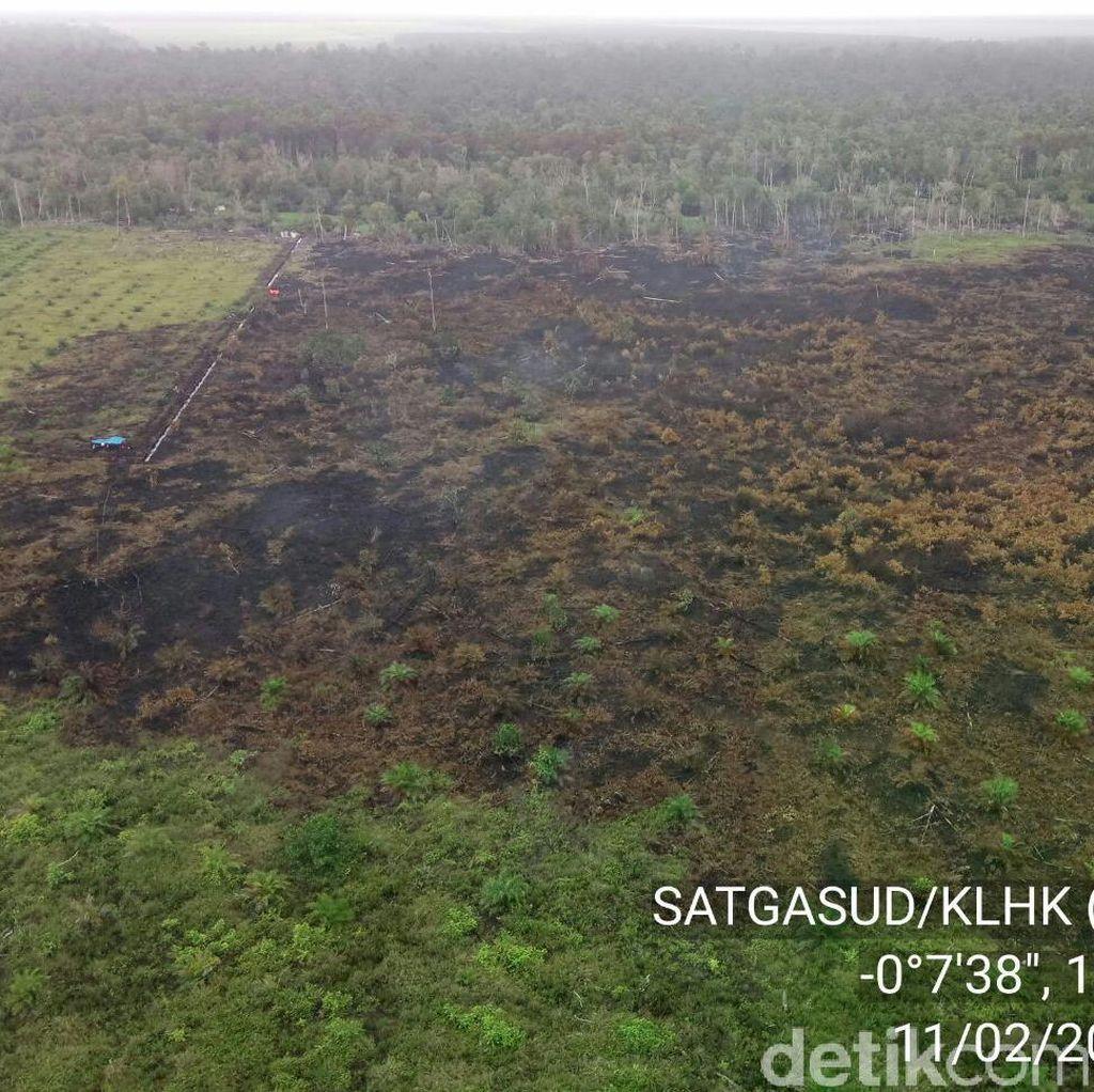Jejak dan Strategi Keroyokan dalam Kebakaran Lahan Gambut di Riau